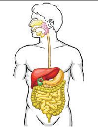 Que es piedras en el pancreas