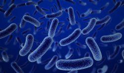 """""""La calidad de la dieta influye en las bacterias de la mucosa del colon"""