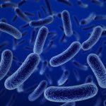 nueva cepa probiótica