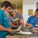 Foro virtual llama a reforzar estrategias contra infecciones zoonóticas