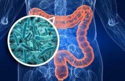 """""""La flora bacteriana protege contra el daño neurológico de las infecciones por virus"""