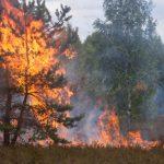 Incendio en un bosque