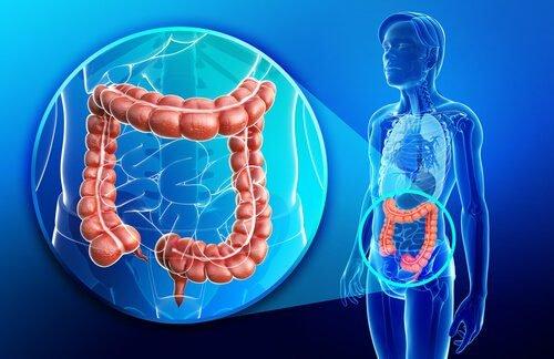 """""""Cómo eliminar los parásitos intestinales"""