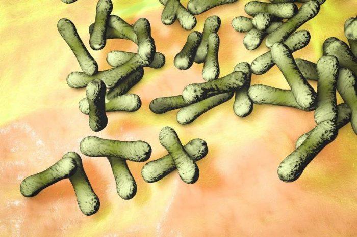 garrotillo-difteria