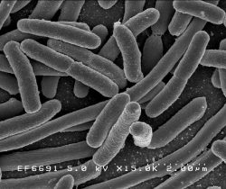 """""""Las bacterias intestinales aumentan en mujeres embarazadas"""