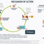 mecanismo de acción de Plitidepsina en el mieloma múltiple