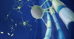 papel de la mielina en el almacenamiento de la memoria