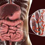 Población bacteriana a nivel intestinal