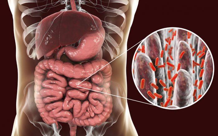 Bacterias intestinales que producen depresión - El médico interactivo