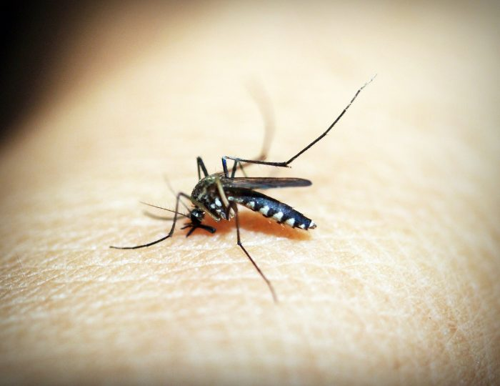 objetivos malaria 2030