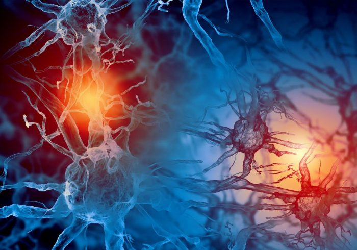 celulas nerviosas