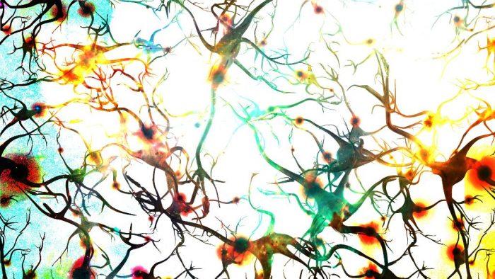 Células cerebro