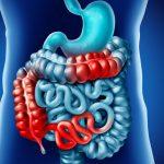 Intestinos sistema digestivo