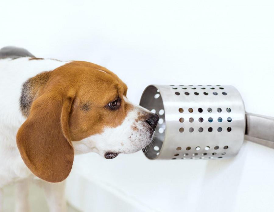 pyoderma en perros sintomas de diabetes