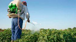 uso de antibióticos en cultivos