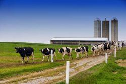 crecimiento ganadería