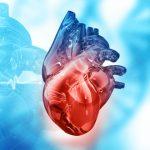 células corazón