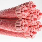 células musculares capacidad regenerativa