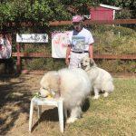 perros detectores de olores