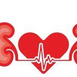 Más investigación para exprimir todo el potencial de los iSGLT2 en la lucha contra los efectos cardiorrenales de la diabetes