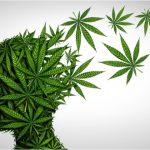 CIBERSAM encuentra un nuevo nexo entre el cannabis y los trastornos mentales