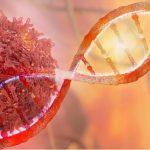 """""""El cáncer es una enfermedad del envejecimiento"""". Foto de una prueba de Oncología de células ADN."""