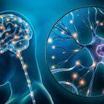 interneuronas-esquizofrenia